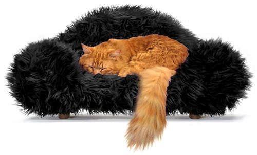 imagini amuzante, pisici amuzante