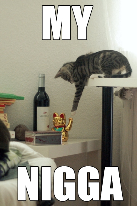 my-nigga-cat-cats-kitten-kitty-pic-picture-funny-lolcat-cute-fun-lovely-photo-images[1]