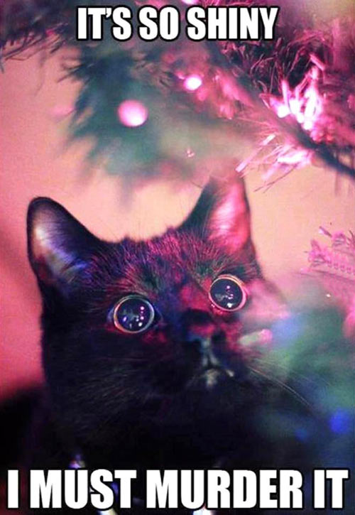 funny-cat-black-eyes-killer[1]