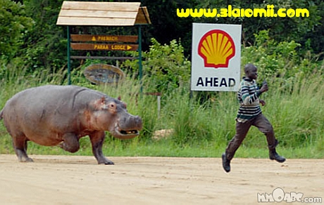 Imagini Haioase Amuzante Alergarea Hipopotam