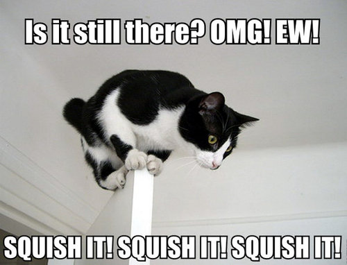 is-it-still-there-cats-kitten-kitty-pic-picture-funny-lolcat-cute-fun-lovely-photo-images