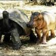 animale haioase amuzante pui